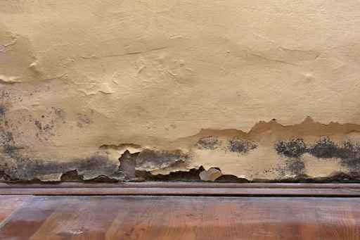 Qu relaci n hay entre el moho en las paredes y la - Moho en paredes ...