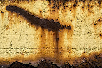 Hongos en paredes por humedad y otras consecuencias de las - Tipos de hongos en la pared ...