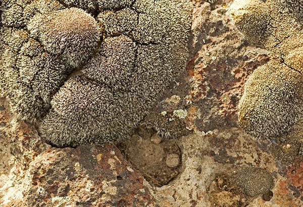 hongos en paredes por humedad