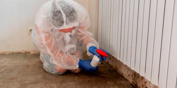 expertos en tratamiento de humedades en Alcudia