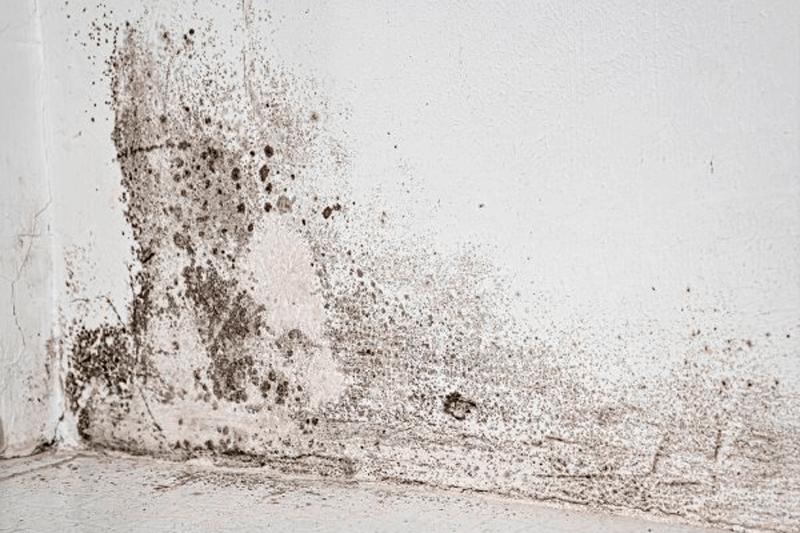 alejar la humedad de tu cuarto de baño